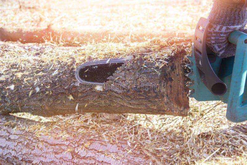 有砍树的锯的人 专业锯裁减firewoods的关闭 图库摄影