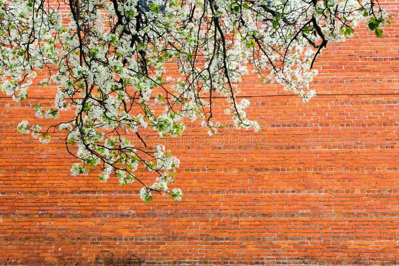 有砖墙的开花 库存图片
