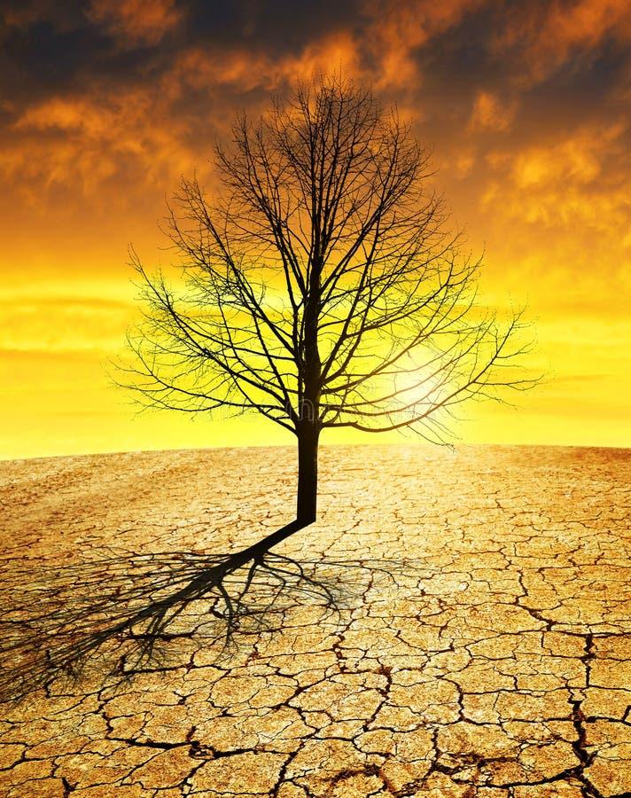 有破裂的土壤的干燥国家和在日落的贫瘠树 免版税图库摄影