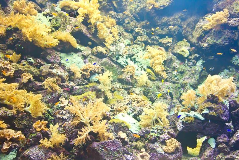 有礁石鱼的热带水族馆 免版税库存图片