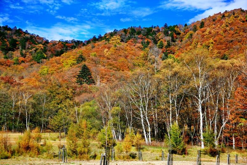 有秋叶的湖Chuzenji在日光 免版税库存图片