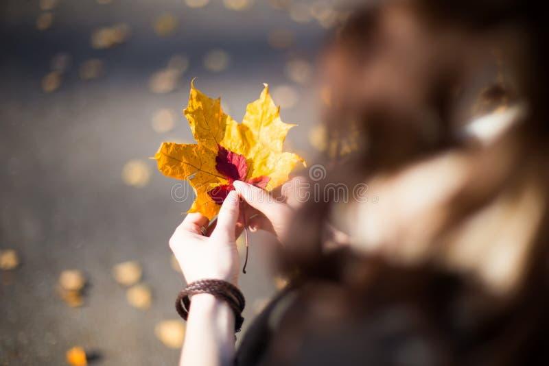 有秋天叶子特写镜头的手. 概念, 成人.图片