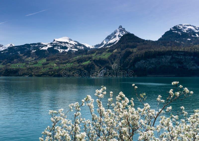有积雪的峰顶和绿色草甸和森林和开花树的美好的绿松石山湖全景在foregro 免版税库存图片