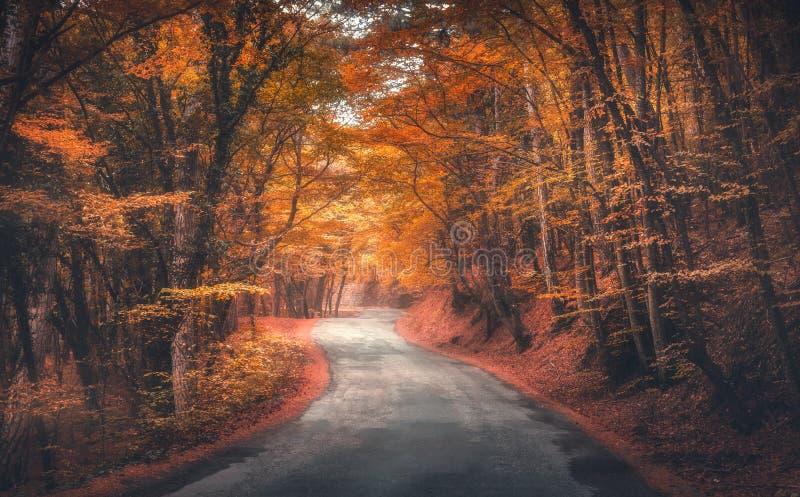 有空的路的惊人的秋天森林在雾早晨 库存照片