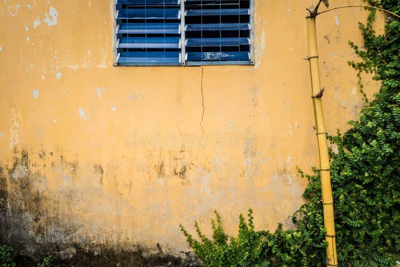 有窗口、竹子和绿叶的脏的墙壁。 库存图片