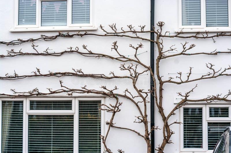 有窗口和树的白色墙壁 免版税库存照片
