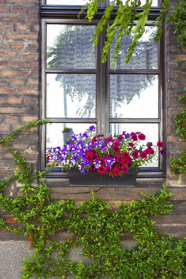 有窗口和花箱子的砖墙有开花植物的 库存图片