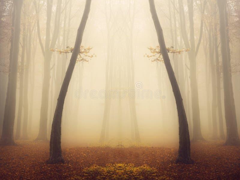 有童话神色的神奇有雾的森林 免版税库存照片