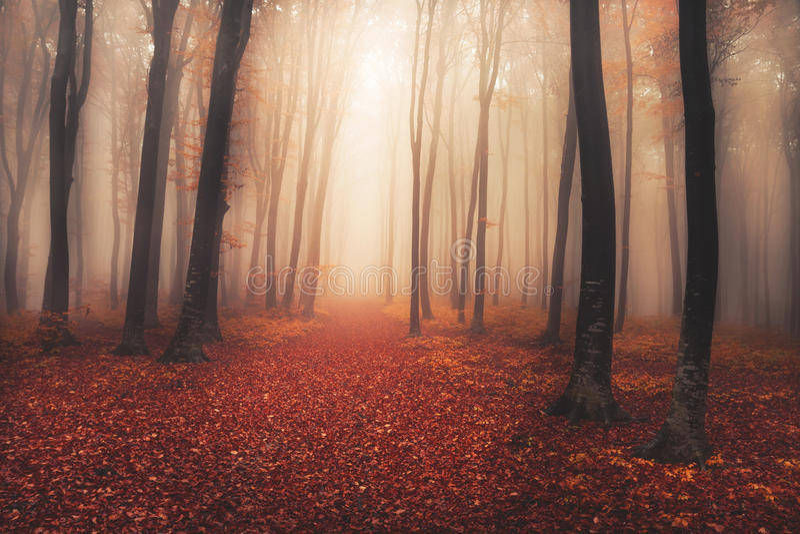 有童话神色的神奇有雾的森林 免版税库存图片