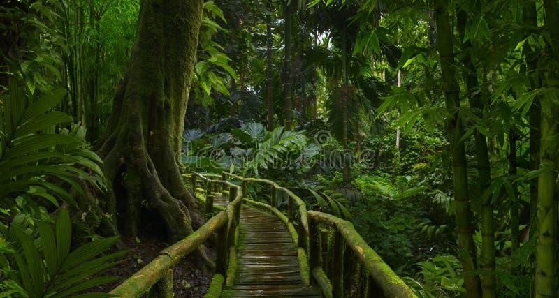 有竹子的深热带森林 免版税库存图片