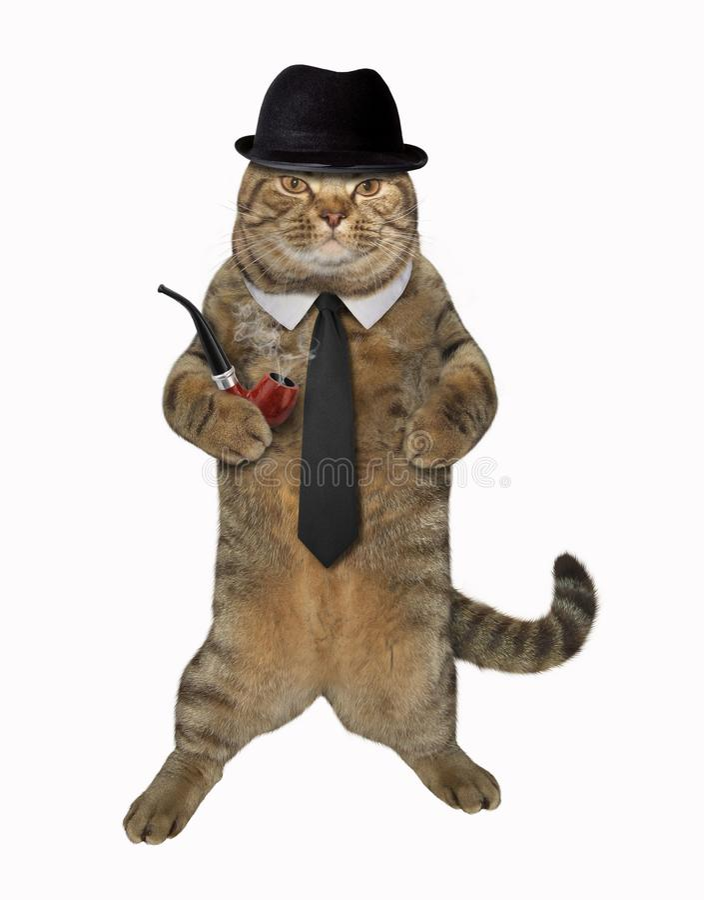 有管子的猫花花公子 免版税库存照片