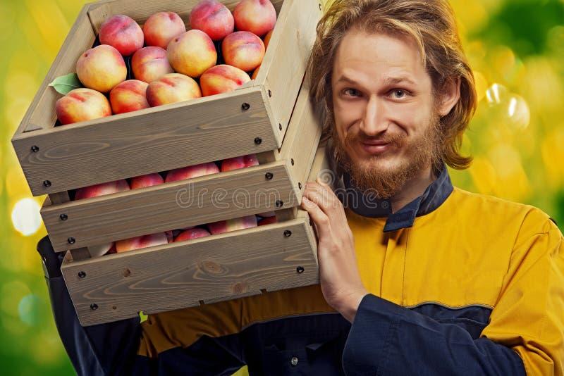 有箱的年轻花匠桃子 库存图片