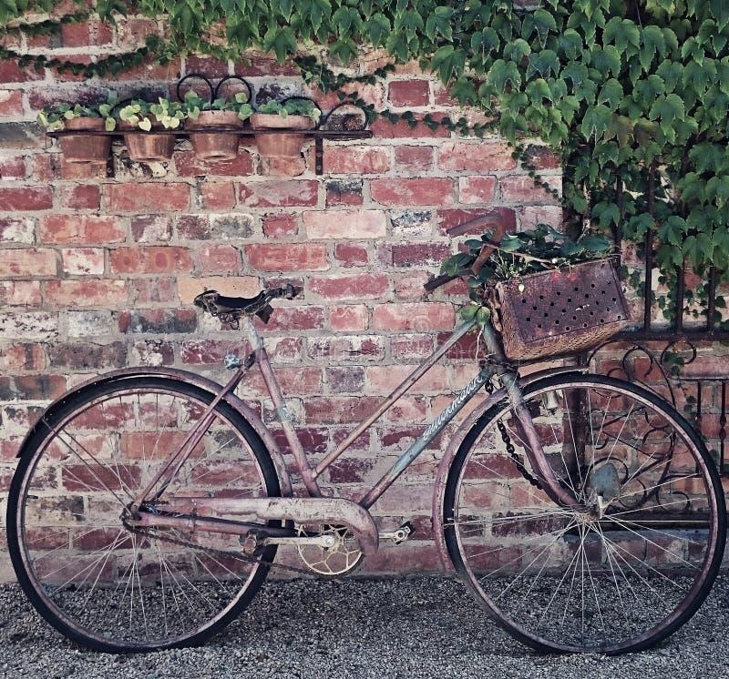 有篮子的减速火箭的自行车 库存照片