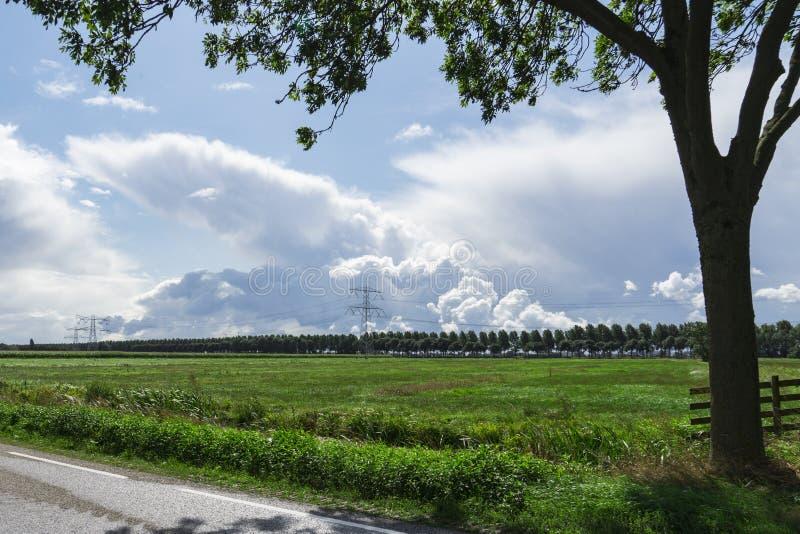 有篱芭、树和高压塔的草甸在Alblasserwaard,荷兰 免版税库存图片