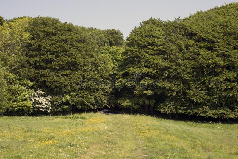 有篱芭和森林的草甸 免版税库存照片