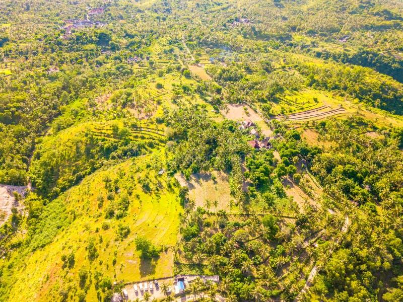有米领域和棕榈树丛的BG 鸟瞰图 免版税库存照片