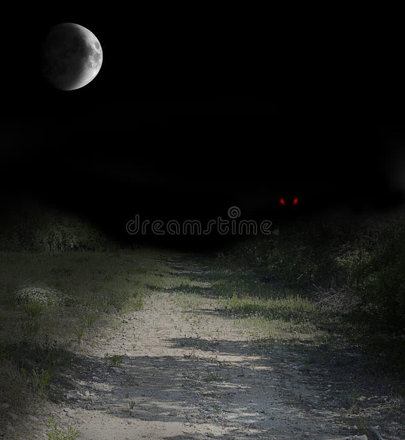 有红色发光的眼睛的黑暗的乡下公路 免版税图库摄影