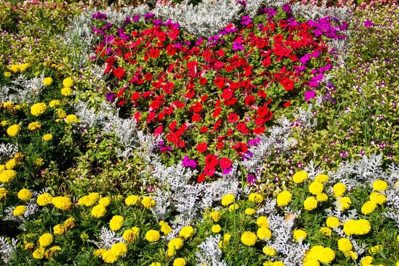 有红色喇叭花和黄色万寿菊的花圃在公园开花 库存照片