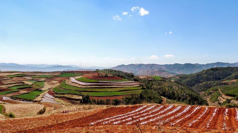 有红色土壤的中国大阳台农场 库存图片