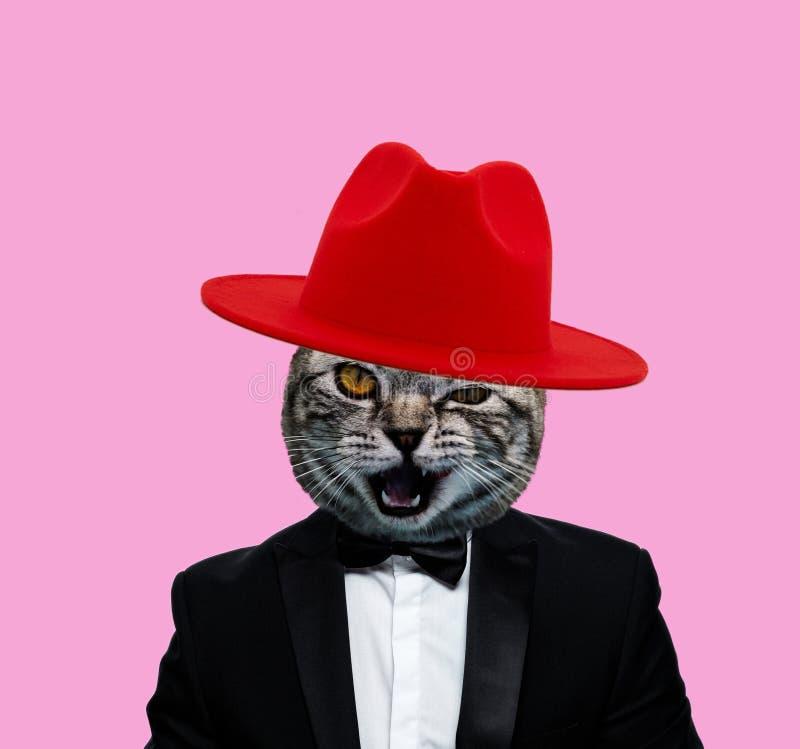有红色帽子和抽烟的衣服的猫头 免版税图库摄影