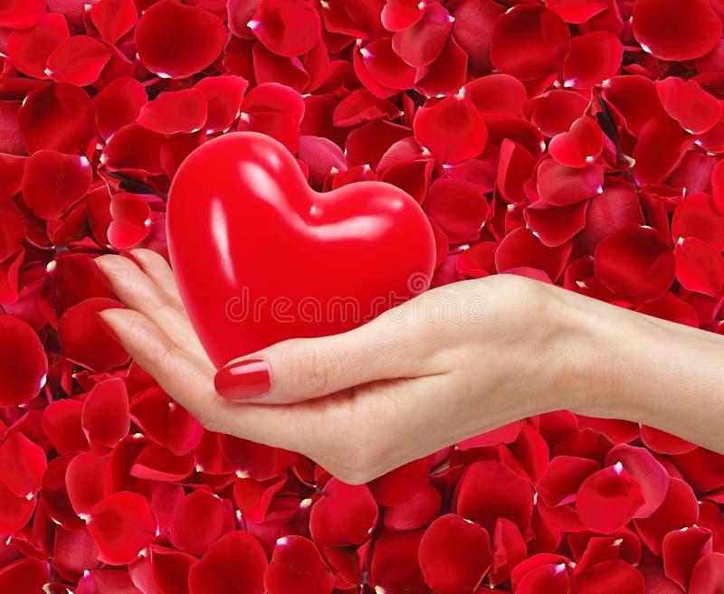 有红色心脏的妇女手在美丽的红色玫瑰花瓣 免版税库存图片