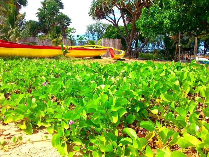 有红色条纹的黄色夏威夷独木舟 库存照片