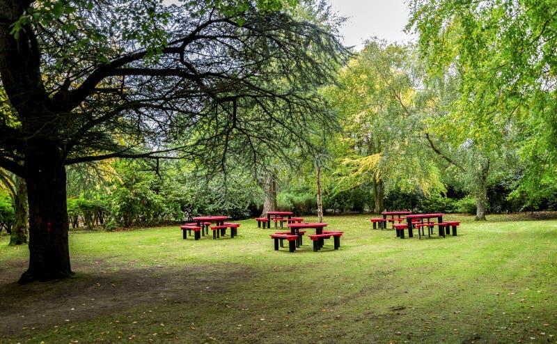 有红色桌和长凳的一个小草甸家庭野餐的在Hazlehead公园,阿伯丁,苏格兰 库存照片