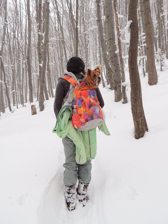 有约克夏狗的妇女在斯诺伊森林里 免版税库存图片
