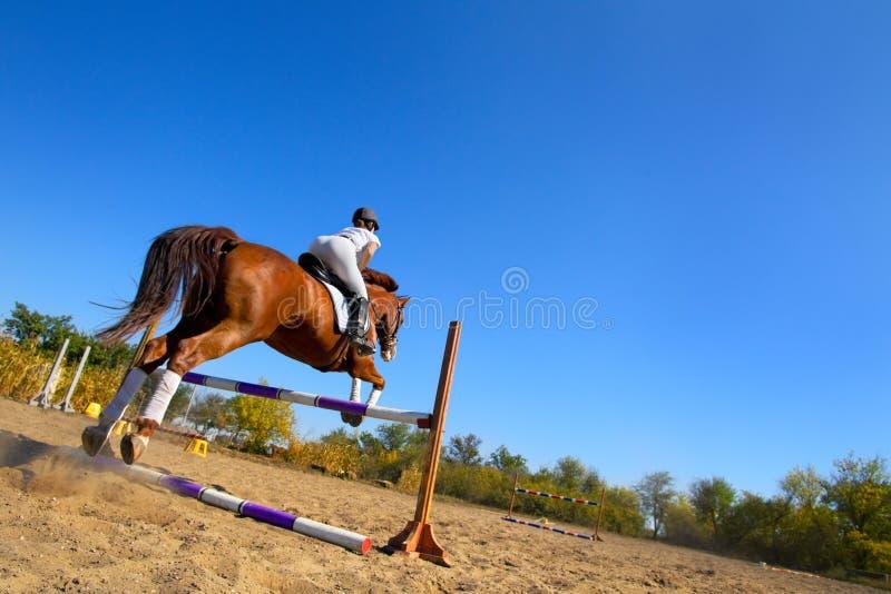 有纯血统马的骑师 免版税库存照片