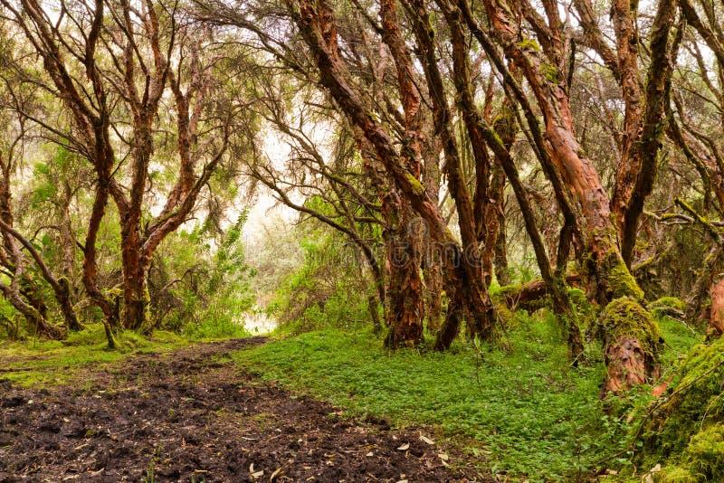 有结构树的森林本质上和绿色木头 库存图片