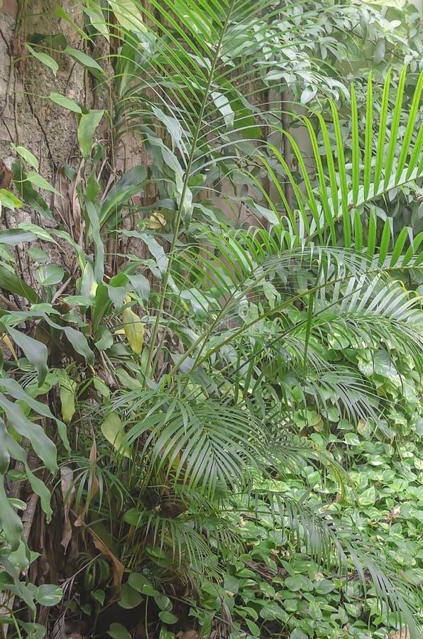 有绿叶的热带植物和在殖民地岩石墙壁的脚的光芒四射的颜色  库存图片
