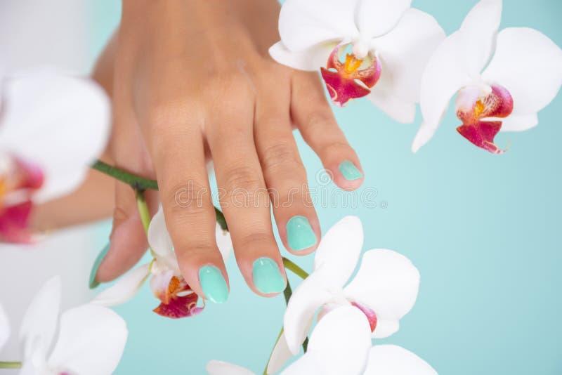 有绿松石颜色修指甲的妇女手在软的蓝色背景和白色兰花花隔绝的钉子在演播室 库存照片