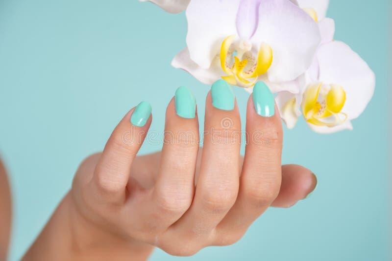 有绿松石颜色修指甲的妇女手在软的蓝色背景和轻的淡紫色兰花花隔绝的钉子在演播室 图库摄影