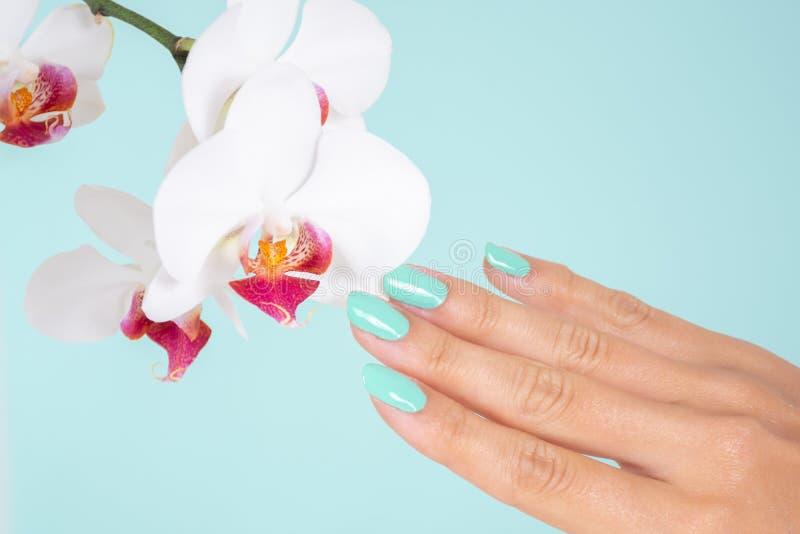 有绿松石颜色的年轻女人手在演播室在软的蓝色背景隔绝的指甲油和白色兰花花 库存照片