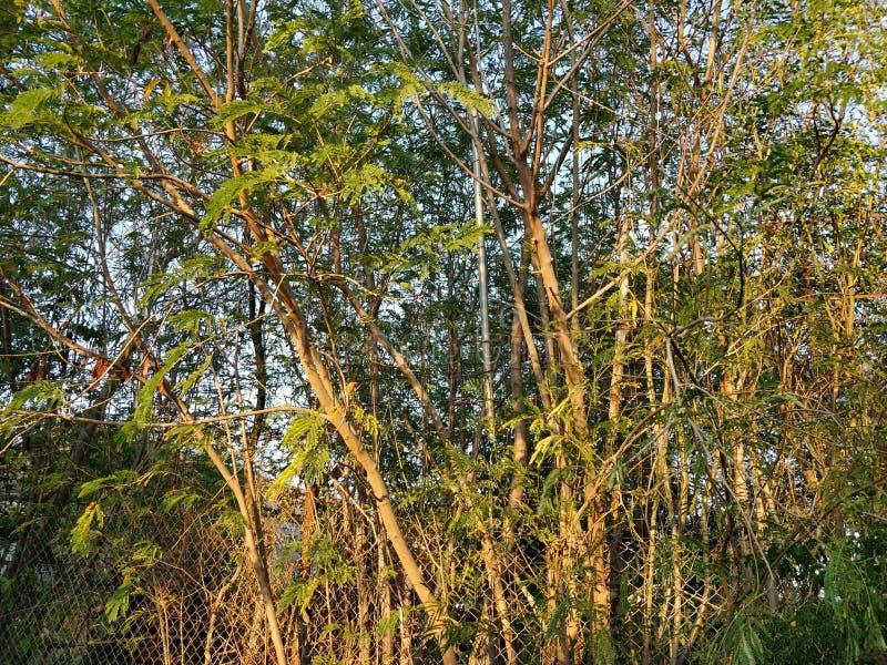 有绿色分支的晴朗,在蓝天的篱芭和叶子 库存照片