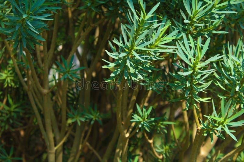 有绿色叶子的植物 库存照片