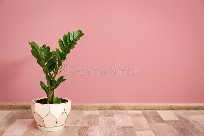 有绿色叶子的热带植物在花盆 免版税库存照片