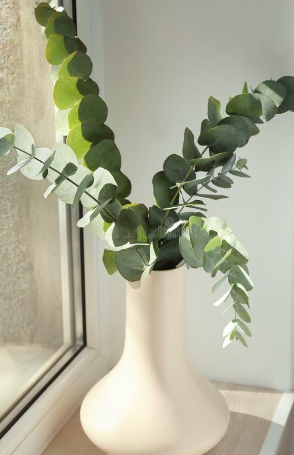 有绿色玉树分支的花瓶在窗台 库存图片