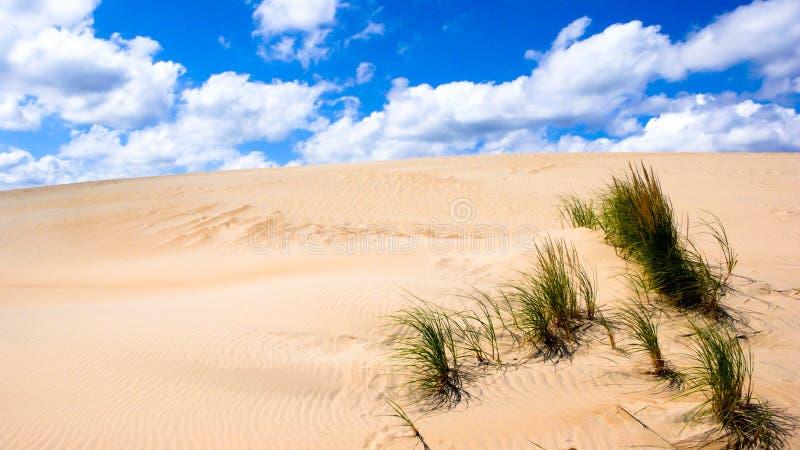 有绿色芦苇和草的沙丘沙漠在北卡罗来纳外滩群岛  免版税库存图片