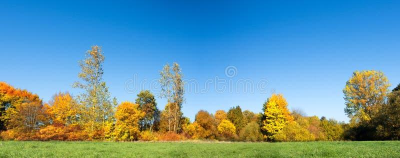 有绿色草甸的五颜六色的秋天森林前景的-全景晴天 免版税图库摄影