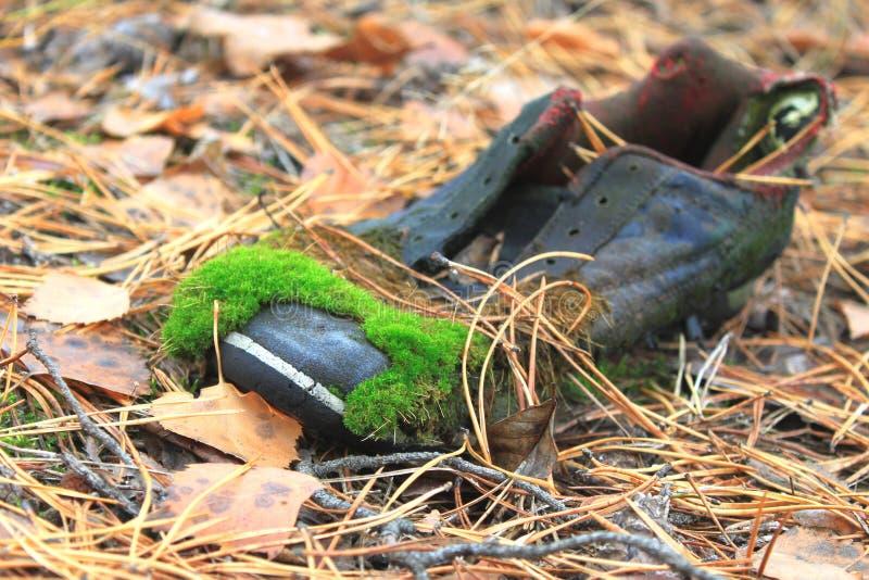 有绿色青苔的老鞋子 免版税库存照片