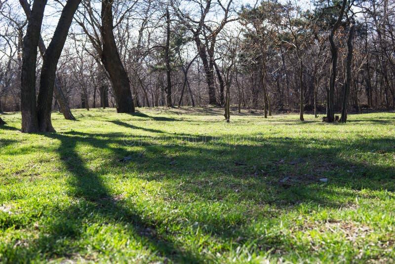 有绿草的早期的春天城市公园 免版税库存照片