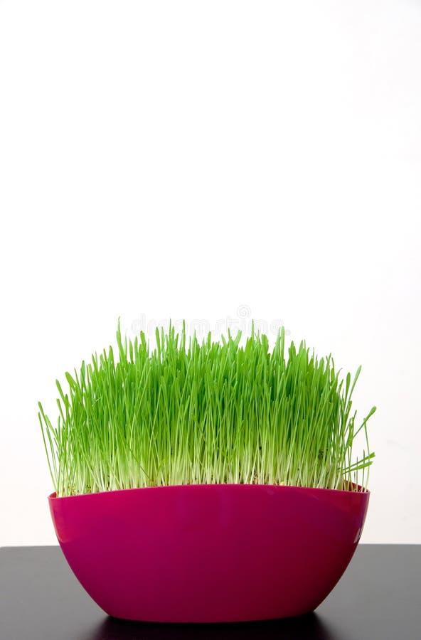 有绿草的桃红色罐在屋子里 库存照片