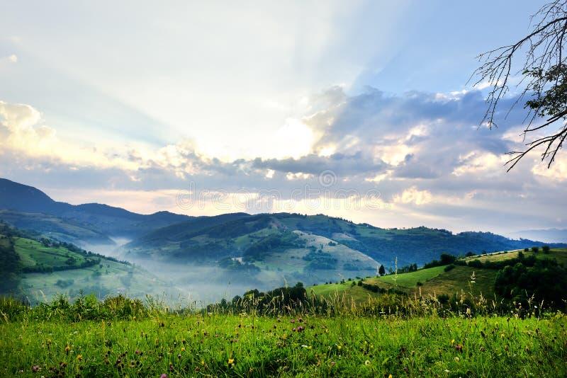 有绿草的美丽的高山草甸 日出 在狂放的特兰西瓦尼亚小山的风景 Holbav 罗马尼亚 低调,黑暗的backgr 免版税库存图片