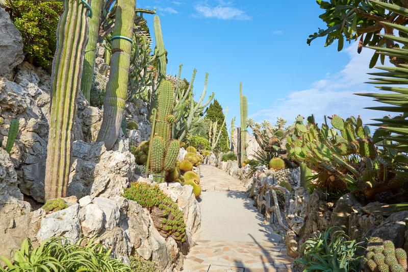 有罕见的多汁植物的异乎寻常的庭院道路,没人在蒙特卡洛,摩纳哥 库存照片