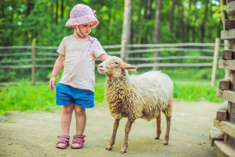 有羊羔的小女孩在农场 免版税库存照片