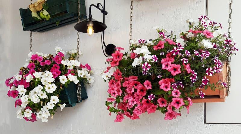 有美丽的喇叭花花的垂悬的罐 库存照片