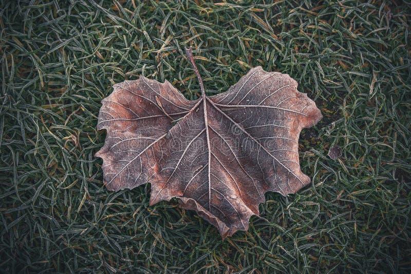 有美好的样式的冻叶子 免版税库存图片