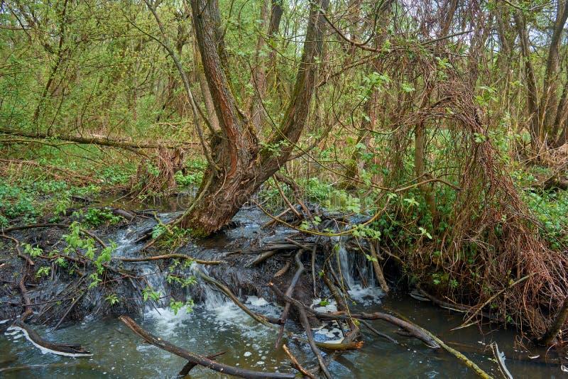 有美好的河门限的落下的河在森林里 免版税库存照片