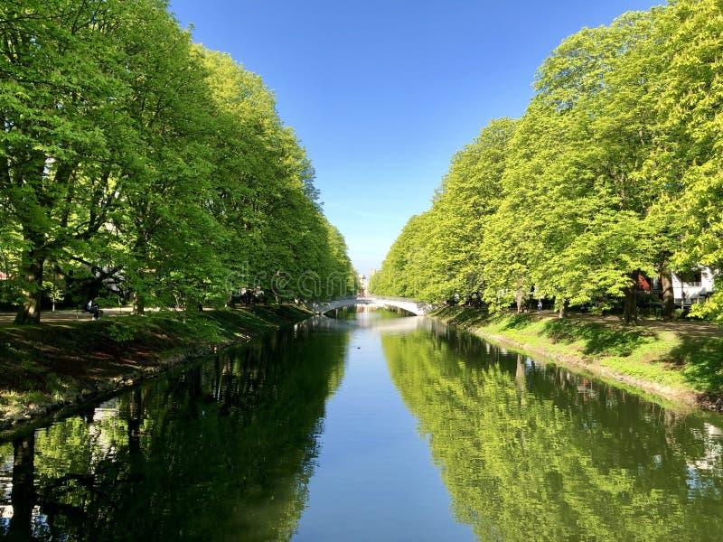 有老栗树的运河和在日出的蓝天 库存图片